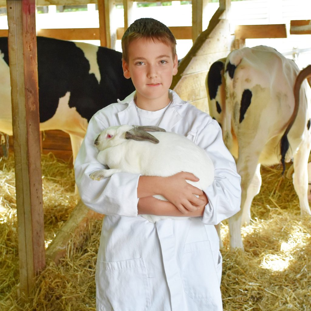 Boy holding a rabbit, in barn with cows