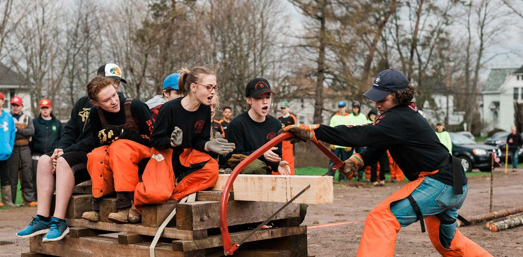 Woodsmen team sawing wood