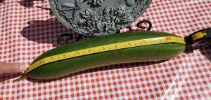 Myles Laffin (36 cm)