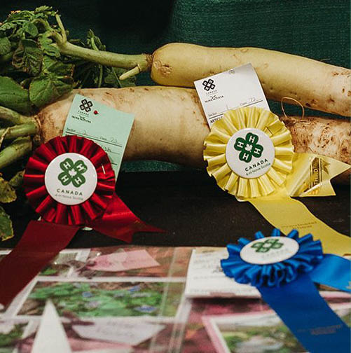 Giant Vegetable Competition