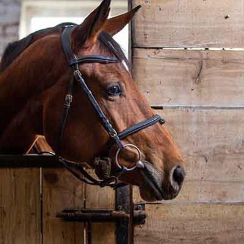 Horse Basics