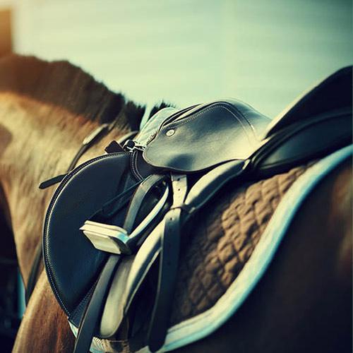 Light Horse-Western/English