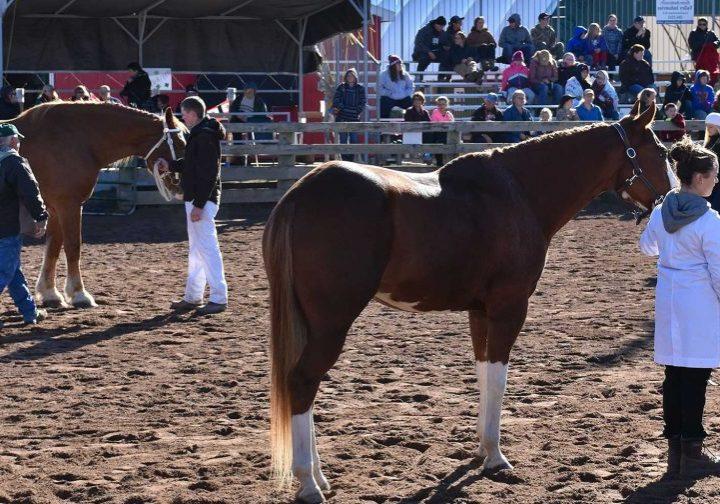 A horse in a pen