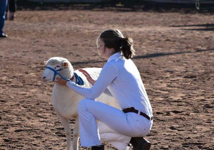 A girl petting her sheep